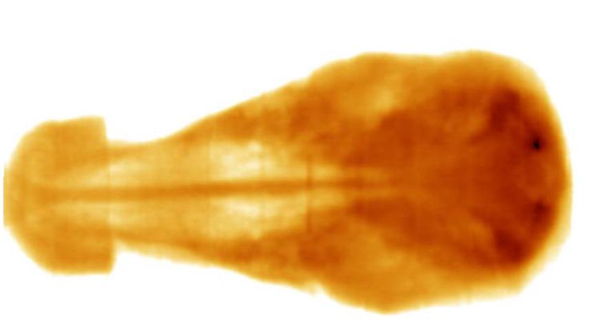 Изображения головы теленка в качестве тестового объекта – портальный снимок, полученный в ходе испытаний системы портальной визуализации на терапевтическом пучке ускорителя СЛ-75-5,